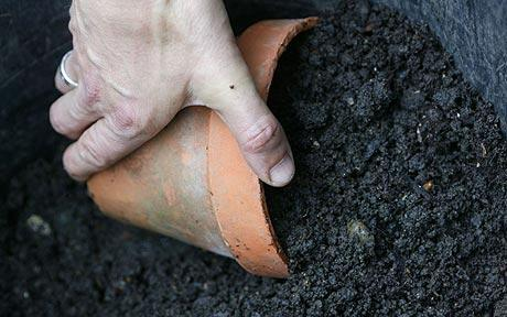 Composting With BioBags