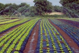 BioBag Agricultural Film