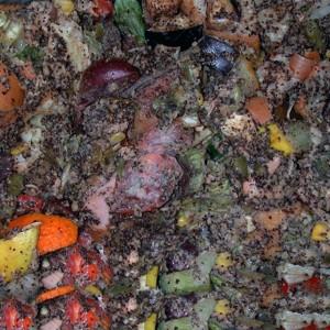 Compost in Non-Ventilated Bucket
